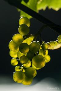 druiven_LI20289c_JD_CHK0816ZO