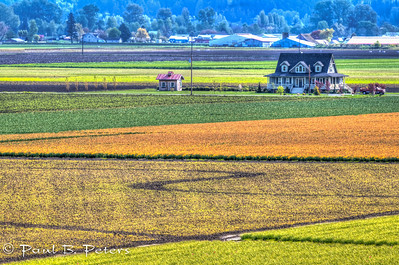 tulip field overlook