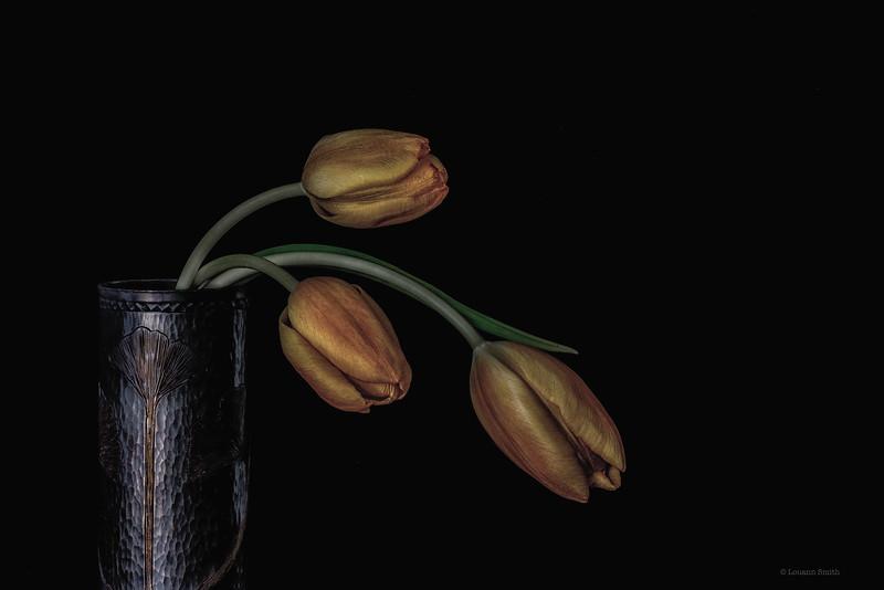 Tulipa 'Aurea Antiqua' 1