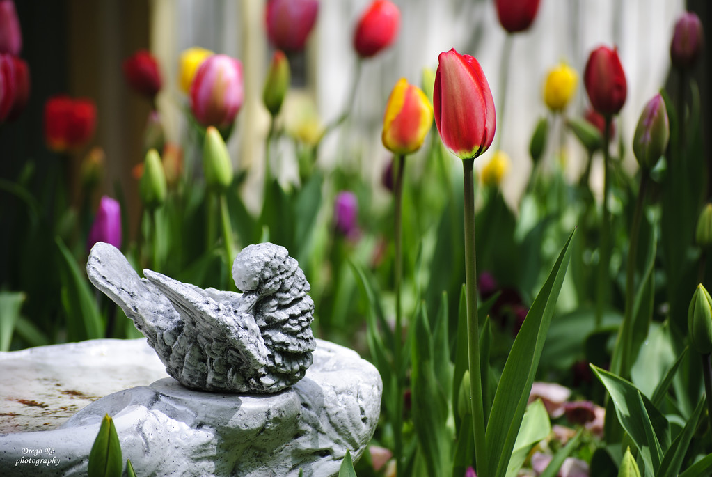 A Bird And A Tulip