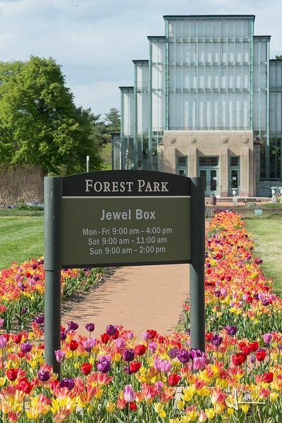 Tulips at the Jewel Box-8