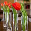 Tulips-5