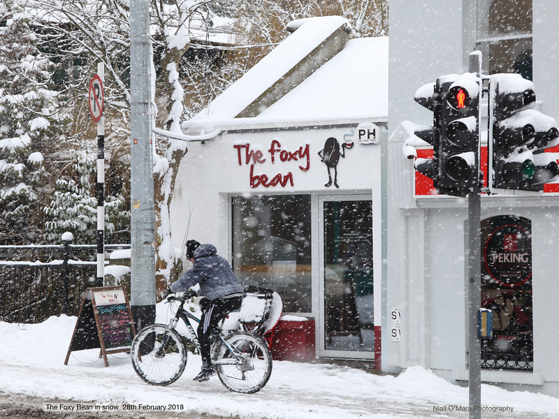 A cyclist braves the snow past the Foxy Bean