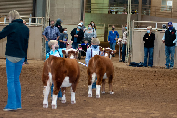 tulsa2020_prejunior_herefords_004