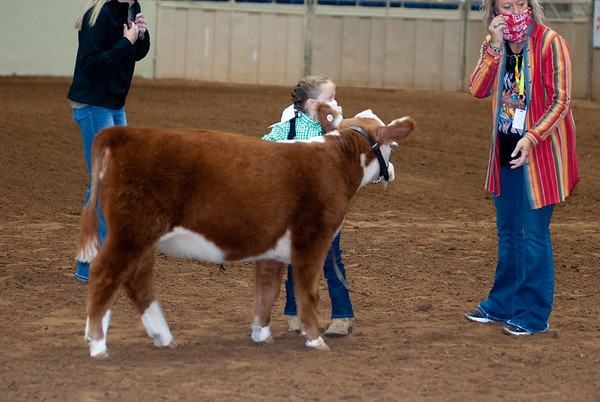 tulsa2020_prejunior_herefords_012