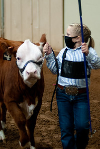 tulsa2020_prejunior_herefords_020