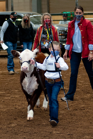 tulsa2020_prejunior_herefords_005