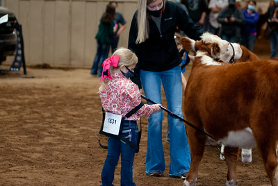 tulsa2020_prejunior_herefords_018