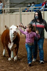 tulsa2020_prejunior_herefords_021