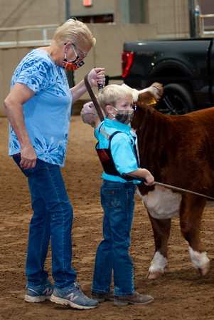 tulsa2020_prejunior_herefords_013
