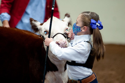 tulsa2020_prejunior_herefords_003