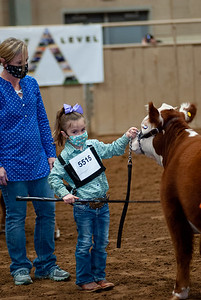 tulsa2020_prejunior_herefords_010