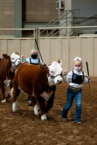 tulsa2020_prejunior_herefords_019