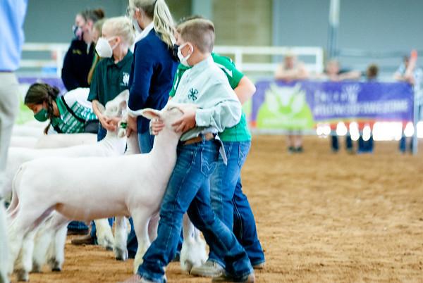tulsa2020_sheep_day1_021