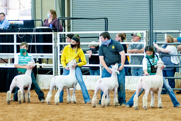 tulsa2020_sheep_day1_003