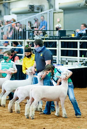 tulsa2020_sheep_day1_002