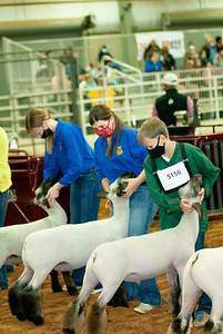 tulsa2020_lambs_market_014