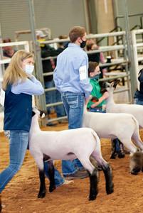 tulsa2020_lambs_market_010