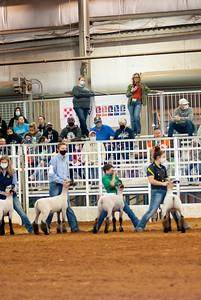 tulsa2020_lambs_market_018