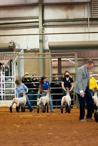 tulsa2020_lambs_market_016