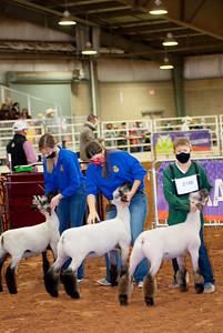 tulsa2020_lambs_market_011