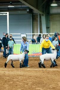 tulsa2020_lambs_market_020