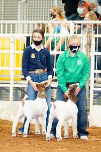 tulsa2020_goats_wether_010