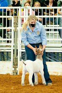 tulsa2020_goats_wether_008