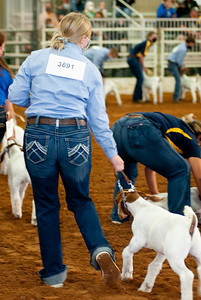 tulsa2020_goats_wether_005