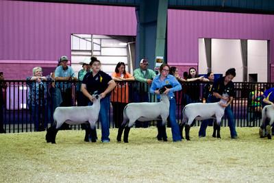 20181001_tulsa_sheep_showmanship-102