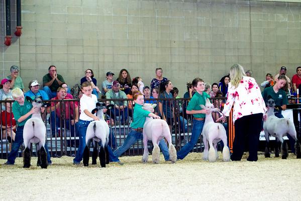 Tulsa Lamb Showmanship