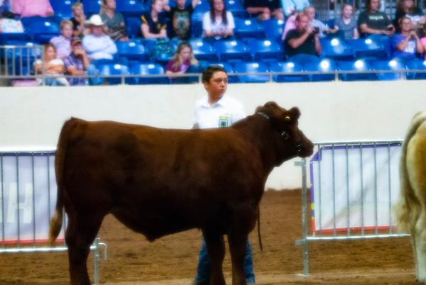 Tulsa Market Steer Show