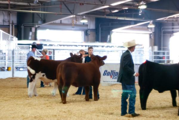 Tulsa Prospect Steers