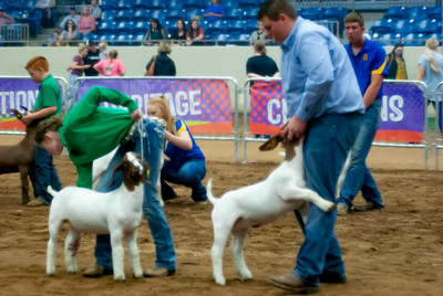 2018_tulsa_granddrive_goats_wethers12