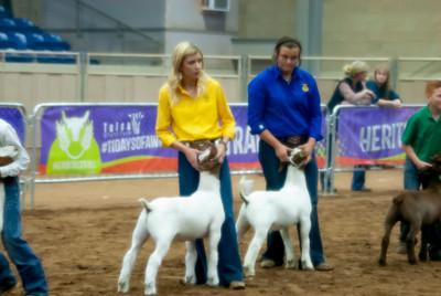 2018_tulsa_granddrive_goats_wethers18