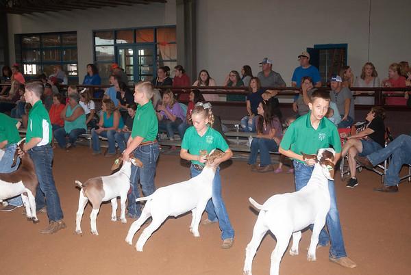 Tulsa Wether Goat Showmanship