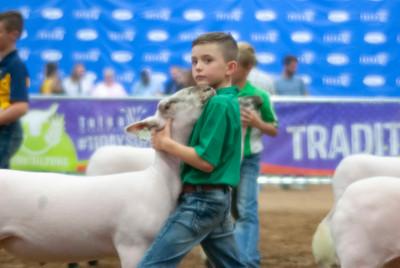 2018_tulsa_granddrive_lambs_wethers17