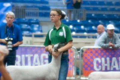 2018_tulsa_granddrive_lambs_wethers24