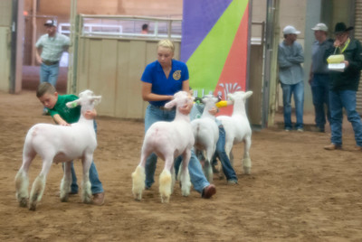 2018_tulsa_granddrive_lambs_wethers13