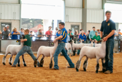 2018_tulsa_lambs_wethers_day2-19