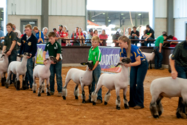 Tulsa Wether Lamb Show Day 2