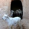 580 Matmata, Tunisia