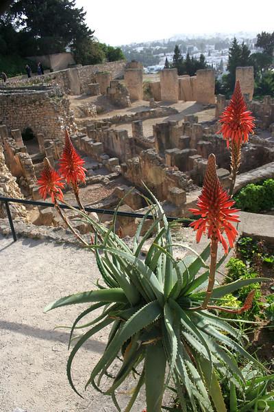 062 Byrsa Hill, Carthage