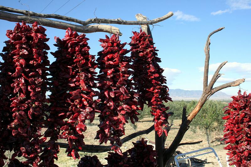 Chilis in Tunisia