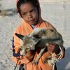 Desert fox, Tunisia