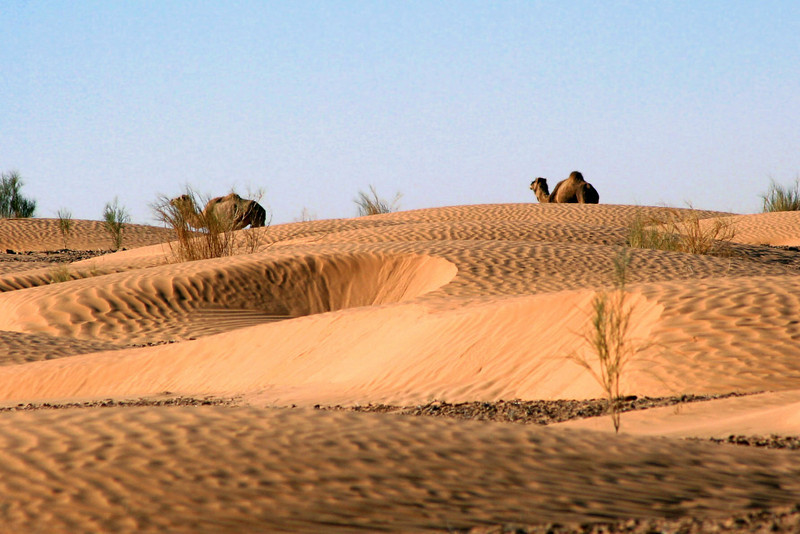 538 Sahara Desert, Tunisia