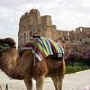 El-Jem Colosseum, Tunisia