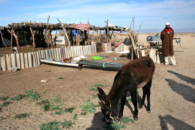 373 Bedouin camp
