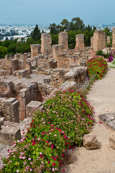 Flowers in the ruins of Carthage near Tunis, Tunisia.