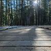 Lake Tenaya Board Walk